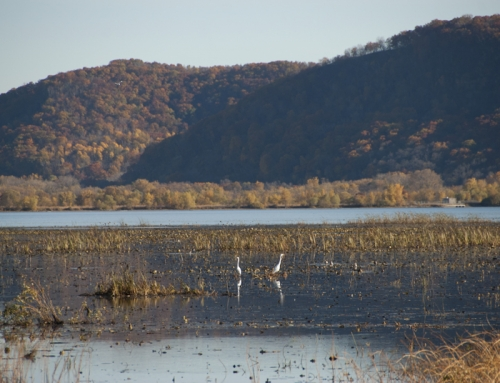 Picture of the Day: Autumn Egrets
